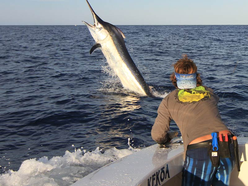 giant-black-marlin