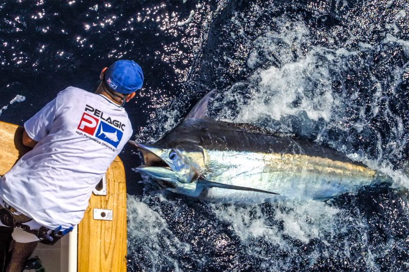 Blue marlin fishing in QLD