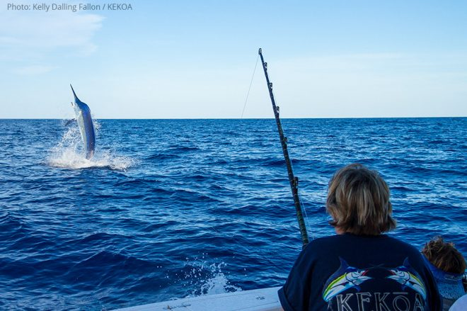 giant-black-marlin5