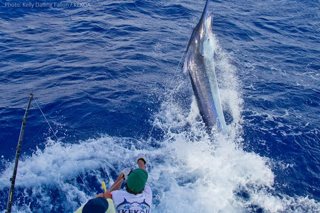 giant-black-marlin7