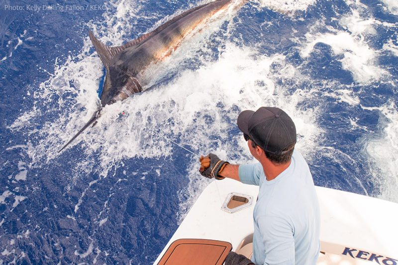 Blue Marlin Fishing at Fraser Island