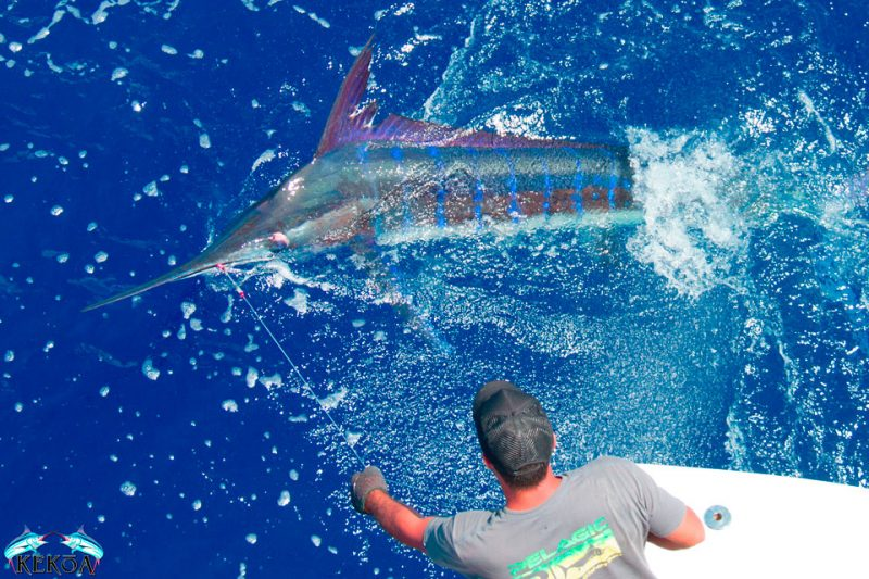 Grand Slam marlin fishing