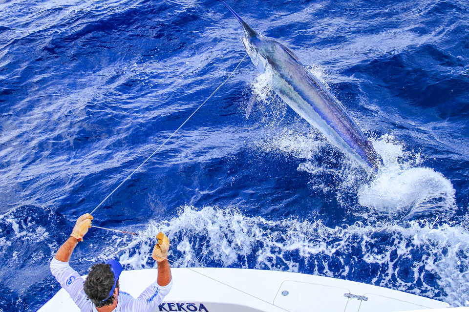 Cairns black marlin charters