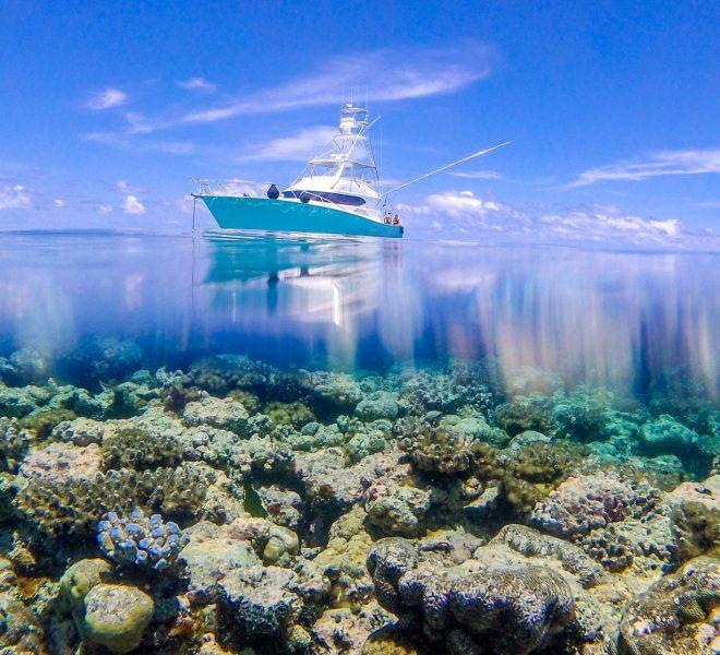 Kekoa over and under reef shot